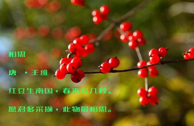 王维,诗三首,唐朝的歌谣,唐朝的抒情