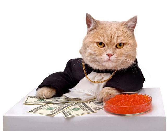 花一千元买一个猫爪杯;花一万元给猫割双眼皮|串串show