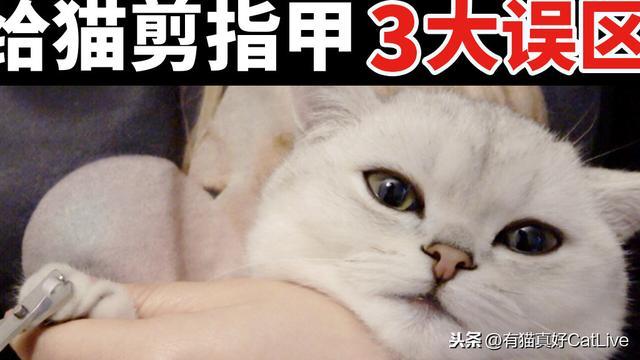 给猫咪剪指甲的正确打开方式,90%的铲屎官都做错了