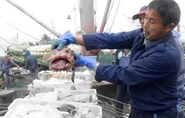 浙江渔夫捞出丑陋怪鱼:比萝卜便宜也没人要_科谷歌邮箱后缀技