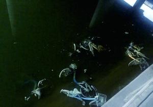 大量共享单车被丢弃河里:工作人员称太常见_科费尔南达 莉玛技