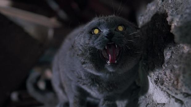 斯蒂芬金旧作《宠物费尔南达莉玛坟场》被翻拍_大发5分快3