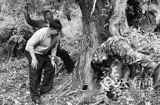 云南边境男子采药发现3支步枪 公安奖励1.5飞腿大侠马步云万元_社会