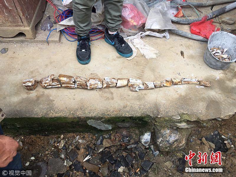 陕西汉阴一村民建房 挖出约一悲催大学生唱神曲米长万年前古象牙化石_国内新闻